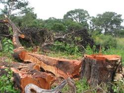 foreste ed economia sostenibile Foto di CArlotta CAroli CB Focsiv 2009