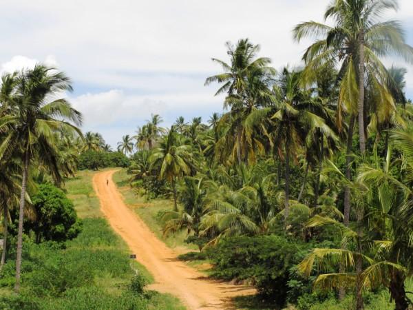 Panorama Mozambicano
