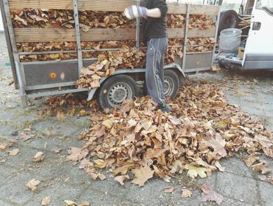 La raccolta della foglie