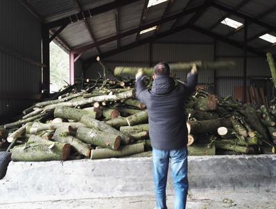 La raccolta della legna