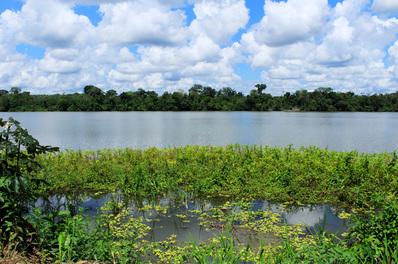 Selva amazzonica, foto di Andrea Piccinnu