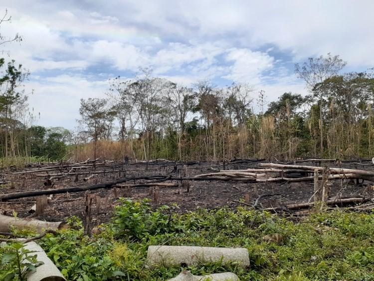 Chaqueo, incendio nella foresta amazzonica