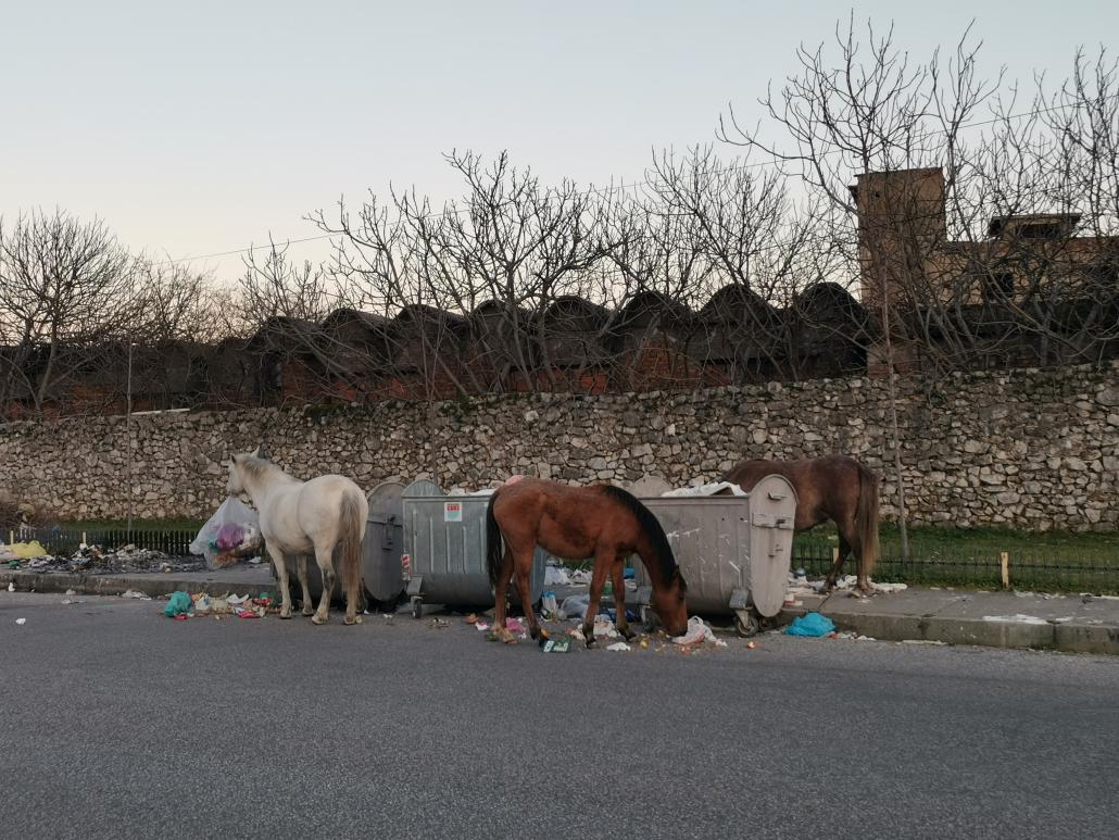 Albania_Scutari_cavalli