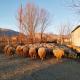 Albania_Scutari_pecore